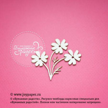 Цветы космеи